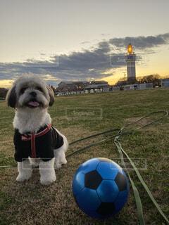 犬,空,冬,夕日,散歩,ボール,シーズー,冬空,ロウソク,巨大ろうそく