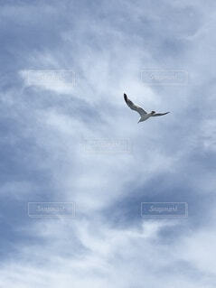空を飛ぶかもめの写真・画像素材[4651438]