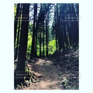 自然,風景,森林,木,屋外,樹木,木立,テキスト,ウッドランド