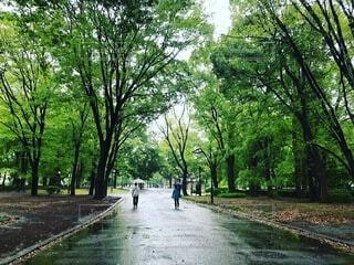 空,公園,屋外,樹木,地面,通り,草木