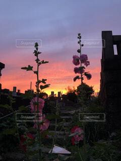 風景,空,花,屋外,緑,雲,夕暮れ,上野,明るい