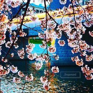 自然,花,桜,橋,木,川,水辺,草木,さくら