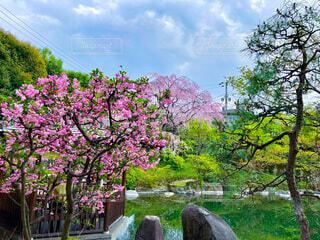 自然,空,花,春,桜,屋外,東京,樹木,庭園,フォトジェニック,ブロッサム
