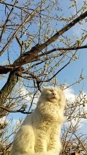 猫,空,動物,屋外,梅,青空,樹木