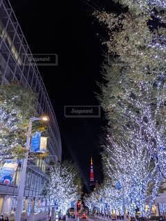 空,東京タワー,夜,夜景,屋外,樹木,明るい,街路灯,クリスマス ツリー