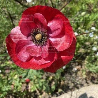 自然,花,癒し,ガーデン