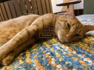 猫,動物,屋内,景色,リラックス,睡眠,ネコ科