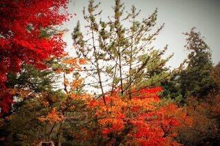 自然,秋,紅葉,屋外,緑,葉,オレンジ,樹木,草木