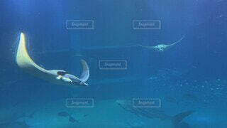 動物,魚,水,水族館,水面,泳ぐ,水中,デート,エイ,海獣,海洋生物学