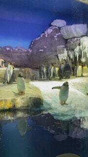 動物,鳥,かわいい,水族館,ペンギン,寒い,北極
