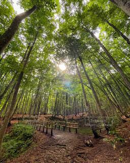 自然,風景,空,秋,森林,木,屋外,景色,樹木,美人林