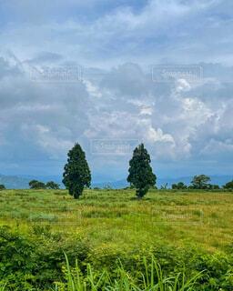 自然,風景,空,緑,草原,雲,景色,草,樹木,大地,新緑,日中,山腹