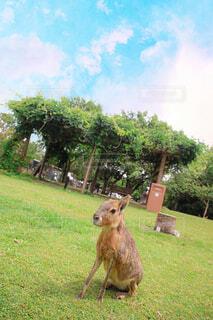 動物,屋外,景色,草,樹木,アドベンチャーワールド,草木