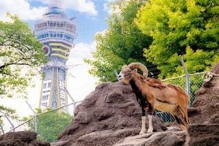 動物,屋外,大阪,樹木,像,通天閣,天王寺動物園