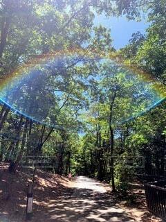 自然,森林,木,屋外,虹,散歩,木漏れ日,樹木