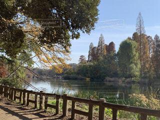 自然,空,公園,秋,屋外,ベンチ,川,水面,樹木,フェンス,草木