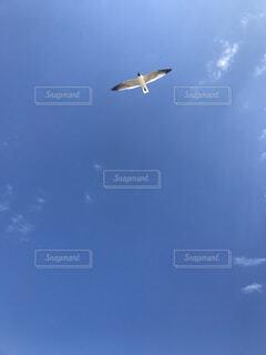 風景,海,空,鳥,屋外,青,飛行機,飛ぶ,カモメ