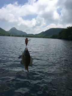 魚,屋外,湖,水面,反射,釣り,ブルーギル