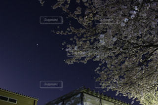 公園,桜,星空,夜桜,星,Park,Sakura,さくら,star,ほし