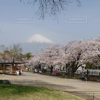自然,空,花,春,富士山,屋外,草,樹木,富士宮市