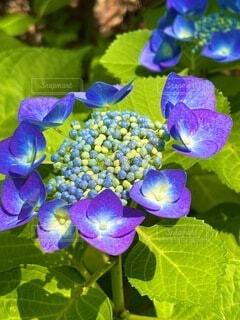 自然,花,草木,フローラ