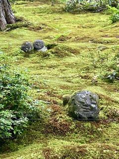 今日  京都大原三千院のわらべ地蔵の写真・画像素材[4641821]