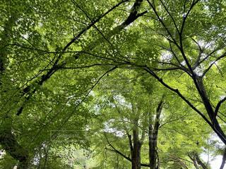 京都の大原三千院の写真・画像素材[4641824]