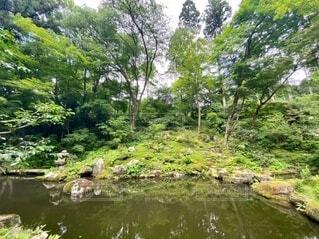 京都大原三千院の庭園の写真・画像素材[4656113]