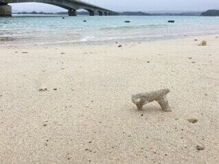 自然,海,屋外,砂,ビーチ,砂浜,貝殻,水面,海岸,素材