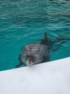 動物,屋外,イルカ,青,水族館,水面,泳ぐ