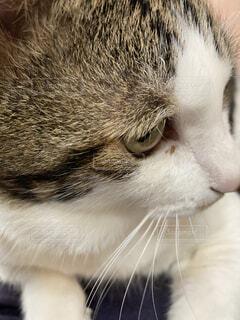 猫,動物,屋内,白,観察