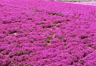 花,屋外,かわいい,景色,草木