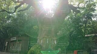 屋外,緑,神社,光,樹木,縁起物,不思議なひかり