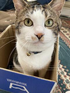 猫,室内,箱,可愛い