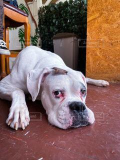 犬,夏,動物,白,景色,床,子犬