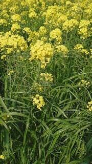 花,屋外,緑,草原,草木,フローラ