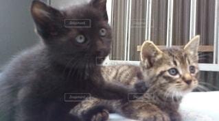 猫,動物,屋内,景色,子猫,座る,ネコ科