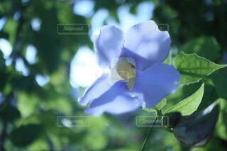 花,夏,屋外,緑,樹木,写真,草木,華,phot,フローラ