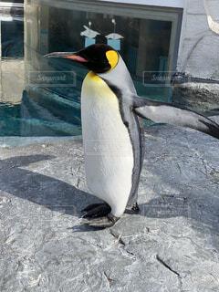 動物園で会ったよ!の写真・画像素材[4641514]