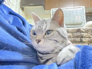 猫,動物,屋内,青,景色,子猫,ネコ科,ベッド