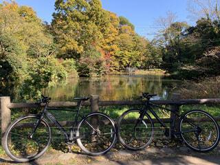 公園,秋,紅葉,自転車,屋外,草,樹木,サイクリング,車両,スポーツ用品,自転車のホイール