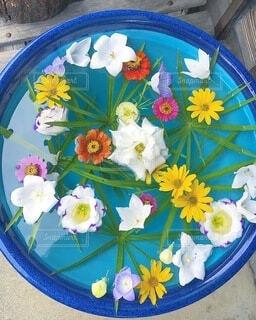 涼しげな花の写真・画像素材[4706464]