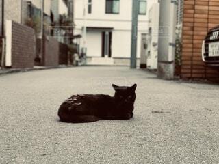 歩道に横たわっている猫の写真・画像素材[4775963]