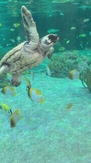 挨拶してくれるウミガメの赤ちゃんの写真・画像素材[4643862]