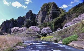 自然,風景,空,花,桜,絶景,屋外,雲,観光地,菜の花,山,景色,サクラ,観光,樹木,岩,旅行,渓谷,渓流,草木,岩山,奇石,仙の岩