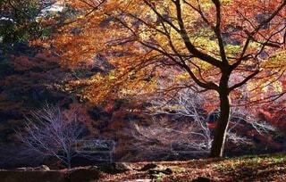 深まる秋の紅葉の写真・画像素材[4647978]