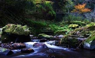 自然,風景,秋,紅葉,森林,屋外,川,水面,水辺,樹木,岩,渓谷,渓流,草木