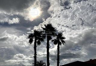 三本の椰子の木の写真・画像素材[4647983]