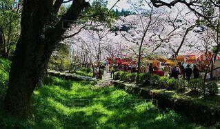 秋月城址の桜と屋台の写真・画像素材[4649295]