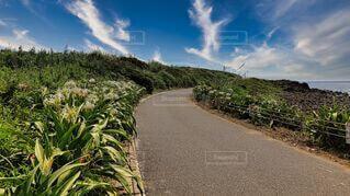 風景,空,花,屋外,雲,道路,海岸,白い花,角島,山口県,群生,ハマユウ